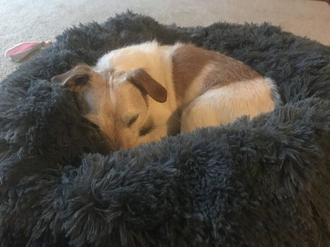 Calming Comfy Cushion Anxiety Pet Bed