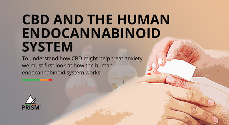 CBD and the human endocannabinoid system
