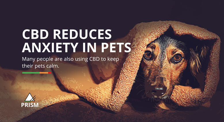 CBD reduces anxiety in pets