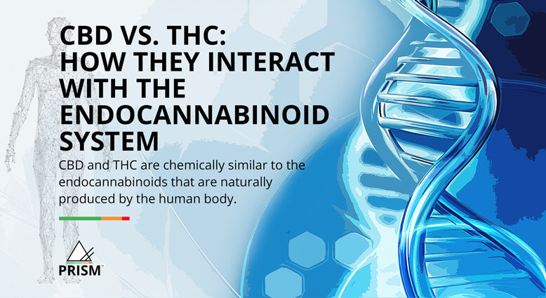 CBD vs. THC: how they interact with the endocannabinoid system