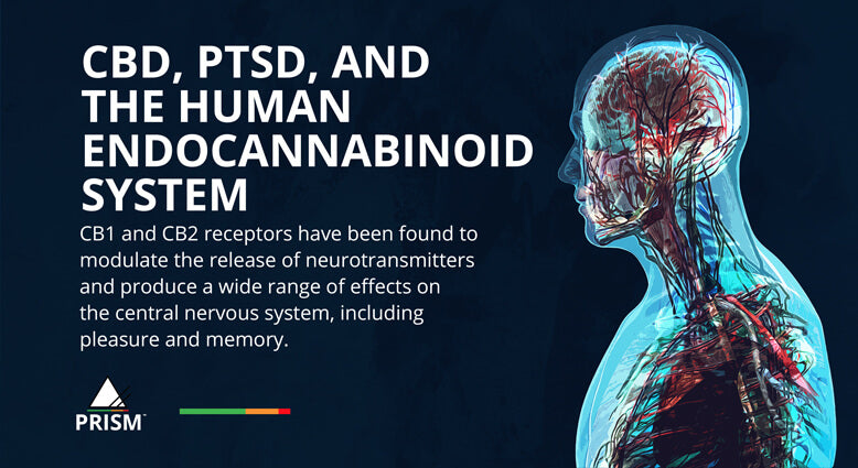 CBD, PTSD, and the human endocannabinoid system