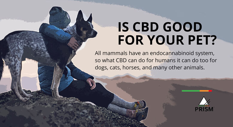 Is CBD good for your pet?