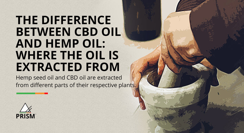 The difference between CBD oil and hemp oil: where the oil is extracted from