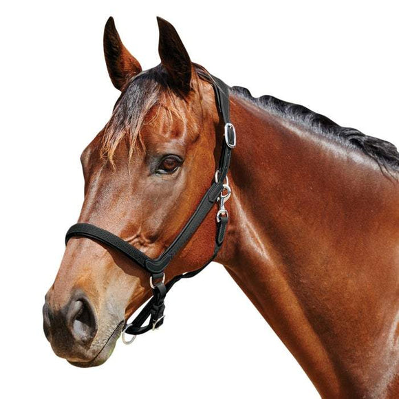 Collegiate Comfitec Leather Headcollar Halters and Leads