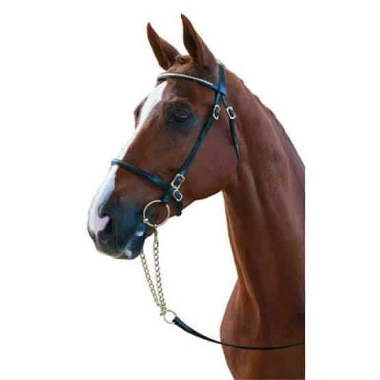 Collegiate In-Hand Bridle Bridles