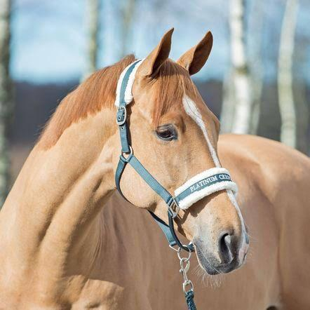 Horze Howard Halter Halters and Leads