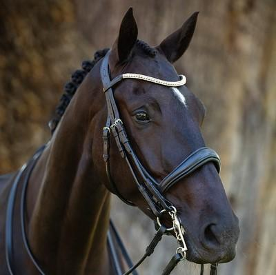 Lumiere 'Madeline' Double Bridle - No Reins Bridles