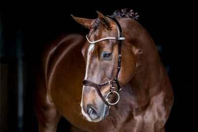 PS of Sweden - Nirak Bridle Bridles