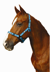 Roma Coordinate Headcollar Halters and Leads