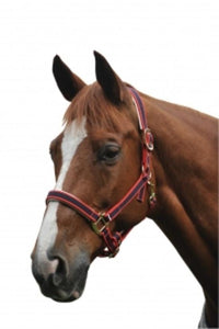 Roma Padded Headcollar Halters and Leads