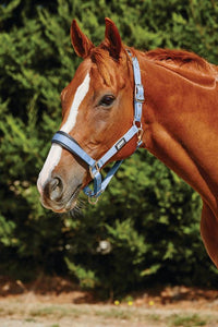 Roma Pastel Headcollar Halters and Leads