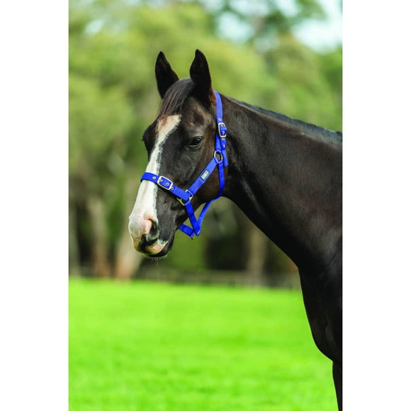 Saxon Nylon Brass Buckle Headcollar Halters and Leads