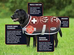 WEATHERBEETA THERAPY-TEC DOG COAT Dog Rugs