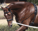Zilco Neck Stretcher Training Aids - Breastplates, Martingales, Running Reins etc.
