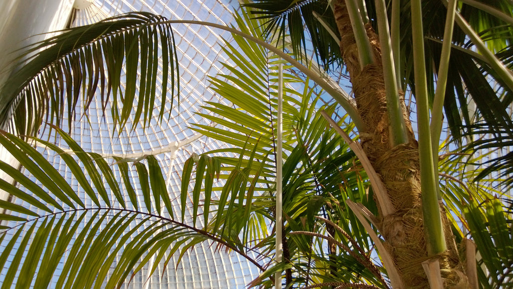 The Allure of Glasshouses