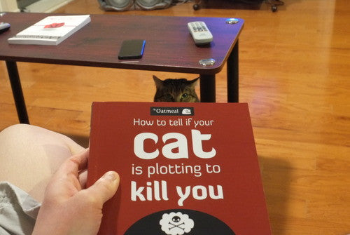... How to Tell if Your Cat is Plotting to Kill You ...