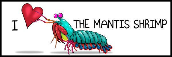 I ♥ The Mantis Shrimp - Bumper Sticker