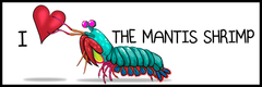I heart the mantis shrimp bumper sticker