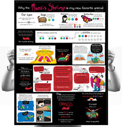 Why the Mantis Shrimp is My New Favorite Animal Poster ...