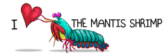 I ♥ The Mantis Shrimp Coffee Cup