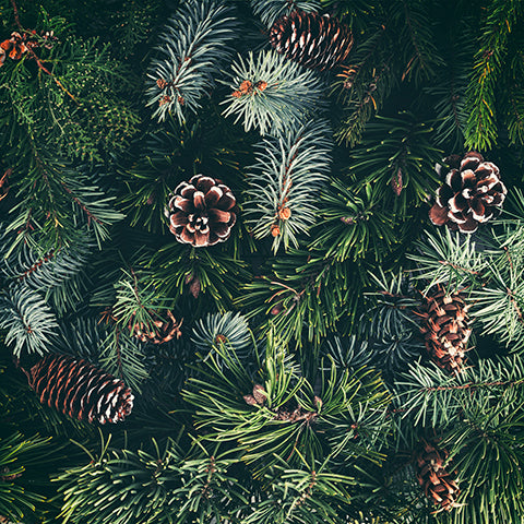 fir needles, pine needles, pine cones, evergreen branches