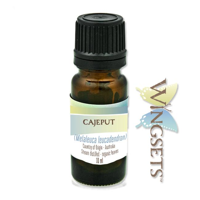 Melaleuca leucadendron, cajeput essential oil, Australia, steam distilled from organic leaves