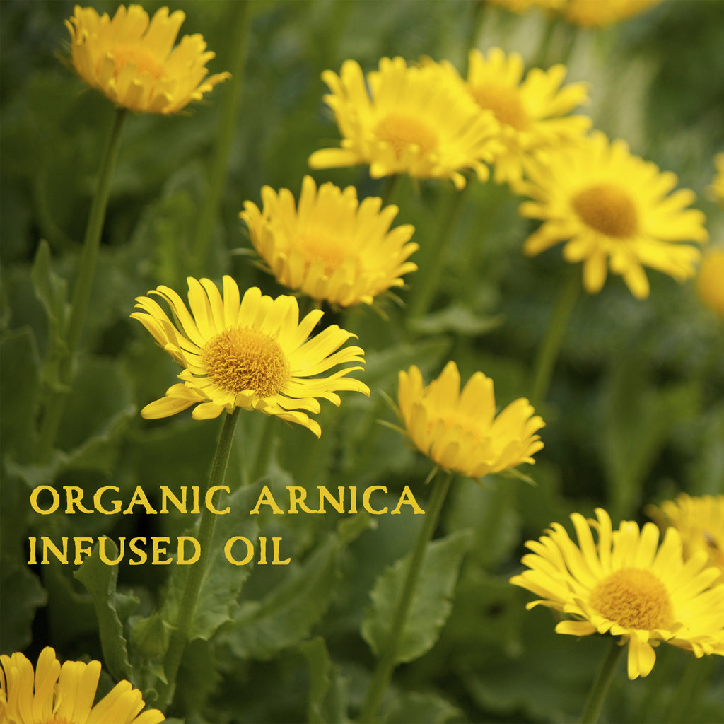Organic Arnica Infused Herbal Oil