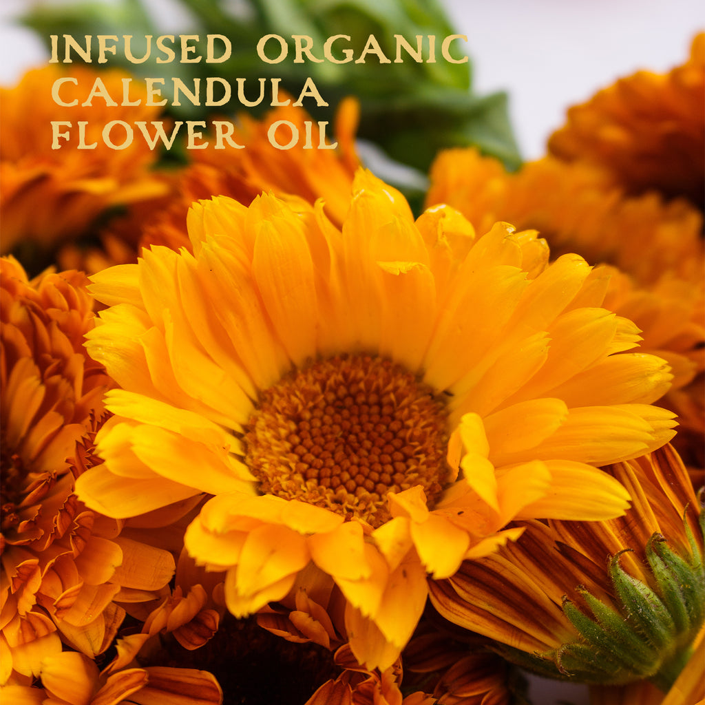 Organic Calendula Infused Herbal Oil in Certified Organic Extra Virgin Olive Oil