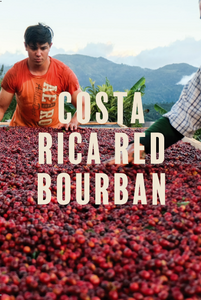 Costa Rica Red Bourbon - Filter - 200g/1kg