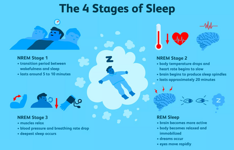 The 4 Stages of Sleep