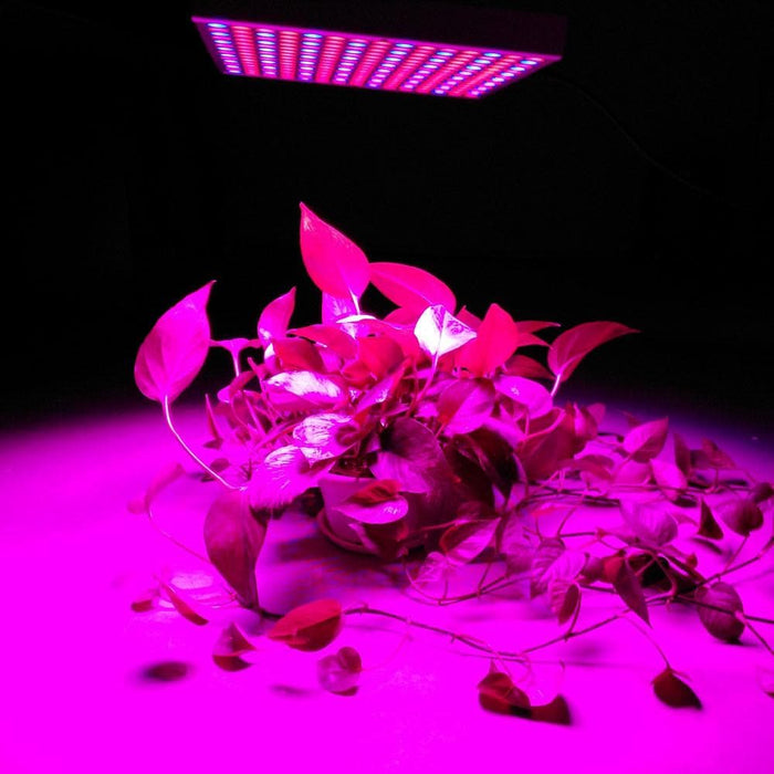 45W 200W Reflector Cup Full Spectrum Led Grow Lights For Grow Tent Box Indoor Greenhouse
