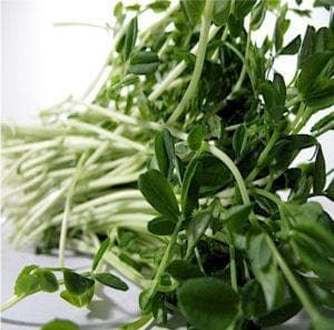Peas For Shoots Sprouts Microgreens
