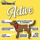 Waterdog Active Complete Health Supplement for Dogs