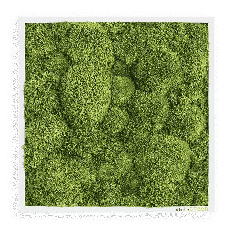 Moss picture bale moss 35x35 cm