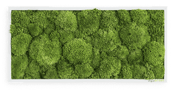 Moss picture bale moss 57x27 cm