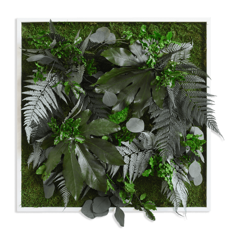 Plant picture in jungle design, white frame 55x55 cm