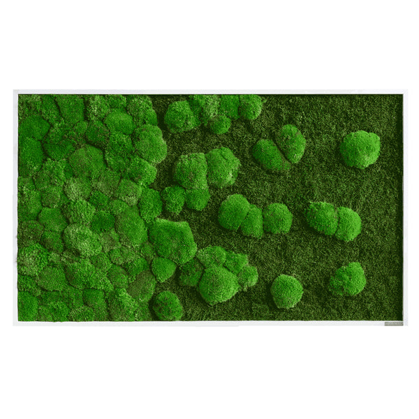 Moss picture course forest and bale moss 100x60 cm