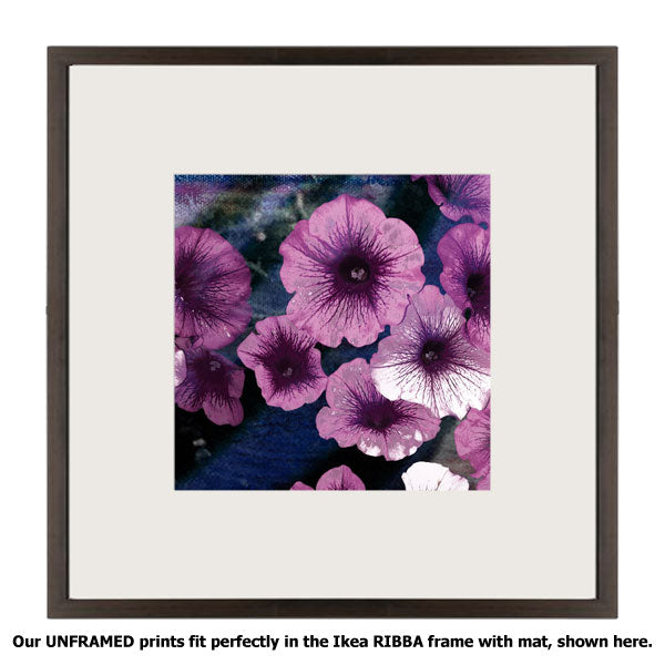 Purple Petunias II