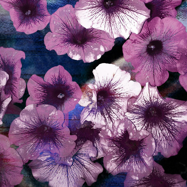 Purple Petunias I