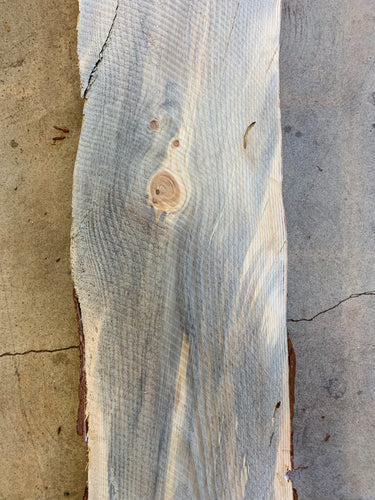 "96"" x 15"" x 2 1/2"" Beetle Kill Pine Live Edge Slab"