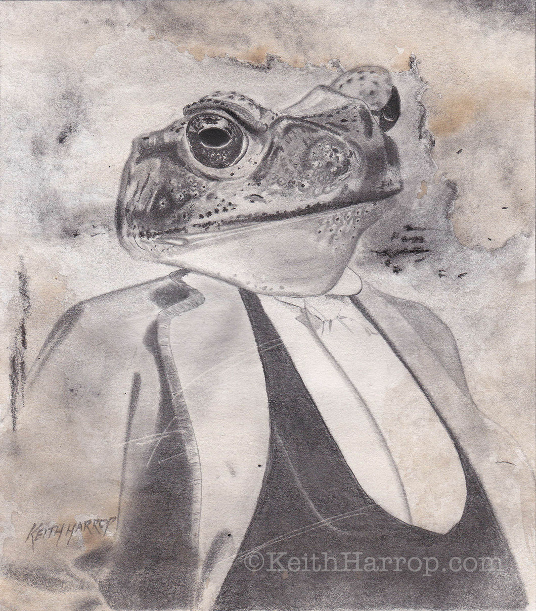 Animorphia #6 (Toad) - Pencil Illustration