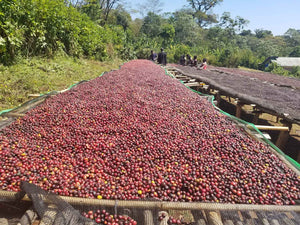 DT Coffee - Ethiopia Guji Sewana washed 250g