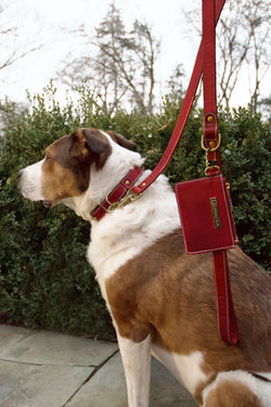 Dog Kit Red [Dog Leash, Leather Leash, High Quality]
