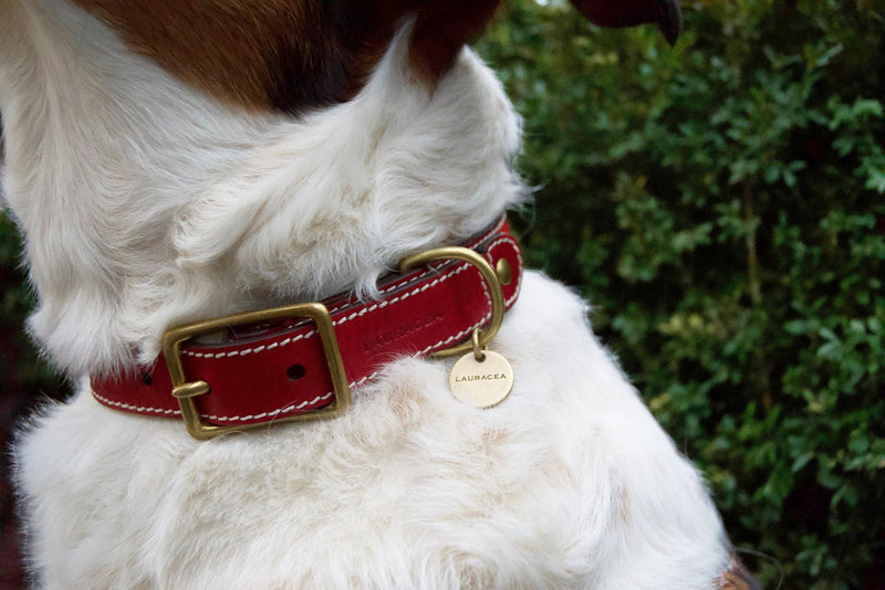 Dog Kit Red [Comfortable Collar, Strong Dog Collar]