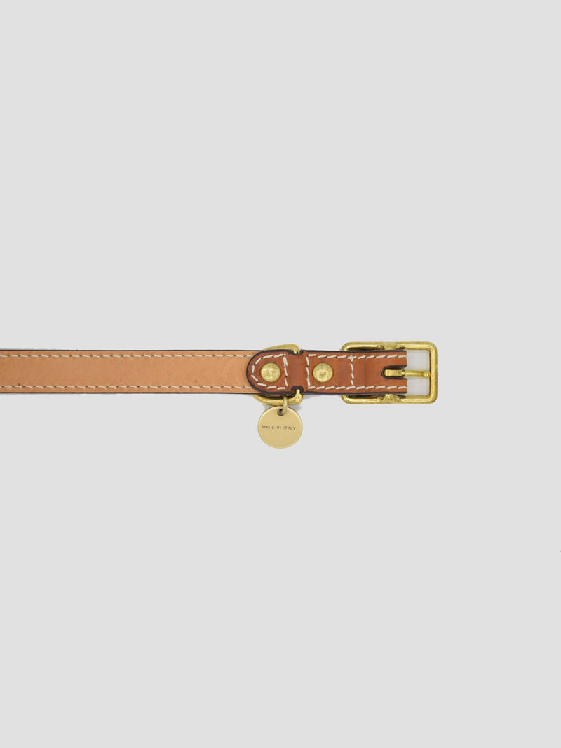 Dog Kit Saddle [Classic Collar, Premium Leash]