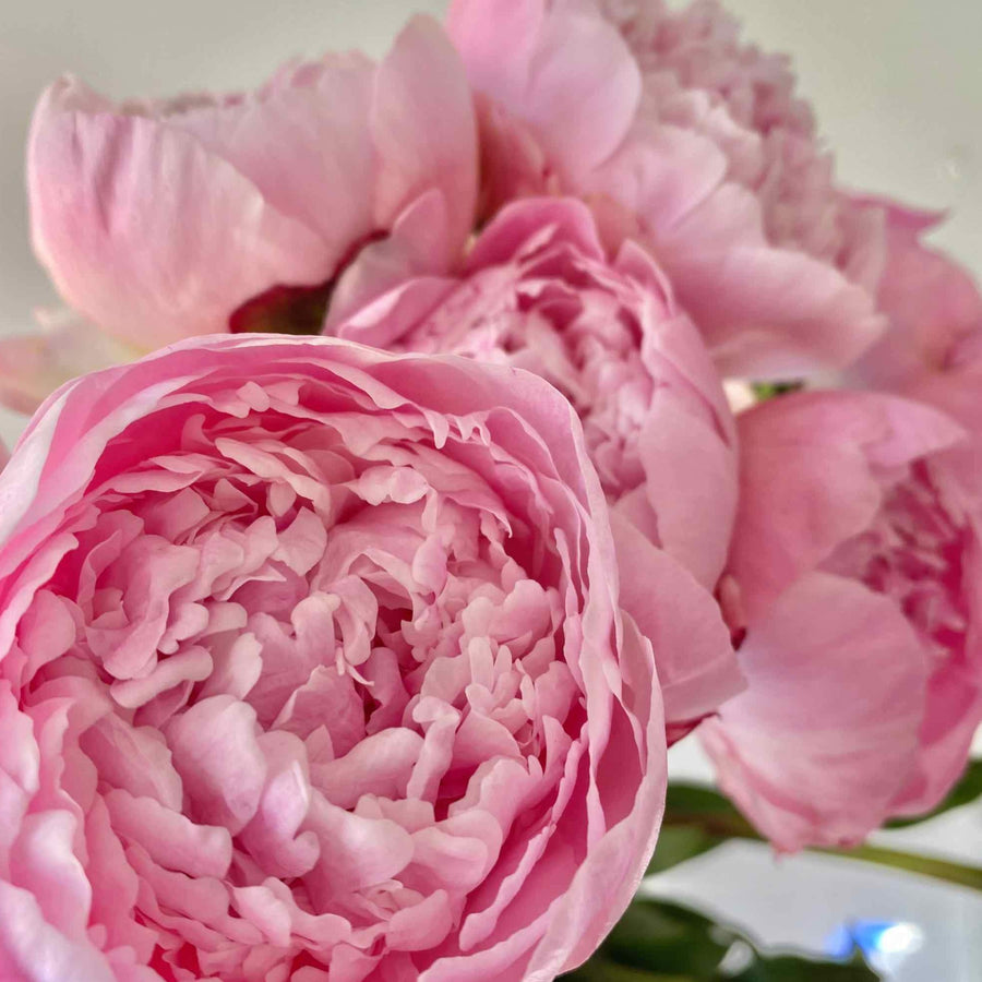 Bouquet Peonies (multiple colors available)