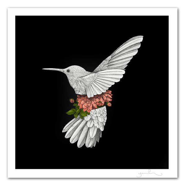 Hummingbird with Dahlias