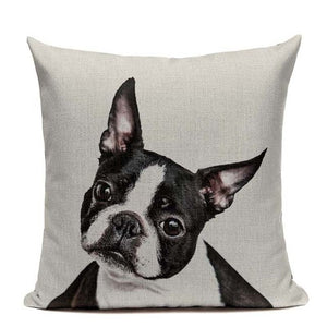 Boston Terrier Cushion Case