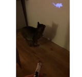 LED Laser for Cat - Red x Paw
