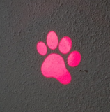 LED Laser for Cat - Pink x Mouse